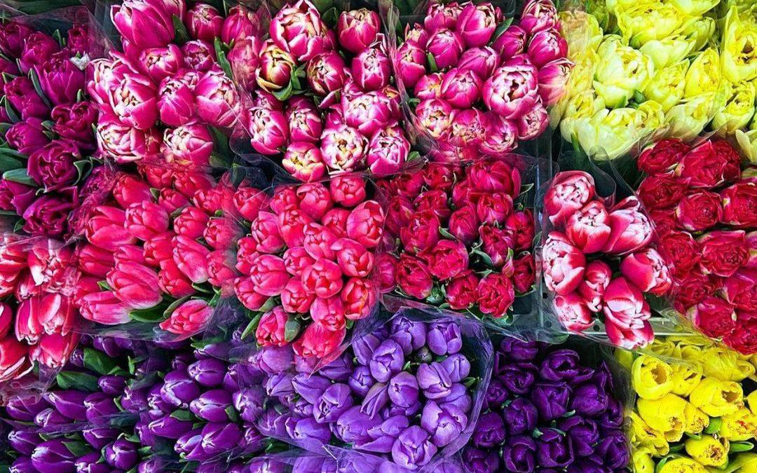 Festiwal kwiatów 2021  na targowisku